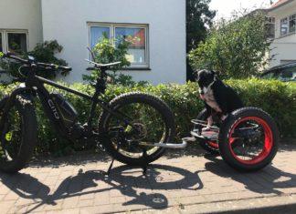 Fahrrad Fahren mit Hund im Anhänger
